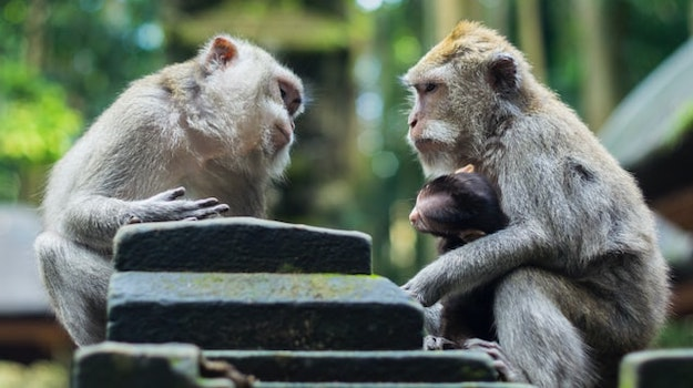 content communication interpersonal monkeys